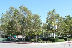 2-Adams-Mini-Park-Gas-Station